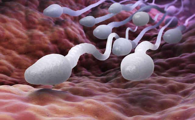 Sperm Alerjisi Hamileliğe Engel midir