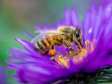 Polli.NET é destaque da Promote Pollinators