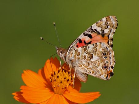 Dia Mundial das Abelhas: proteção aos polinizadores depende de todos