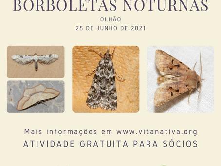 Sessão de identificação de borboletas noturnas