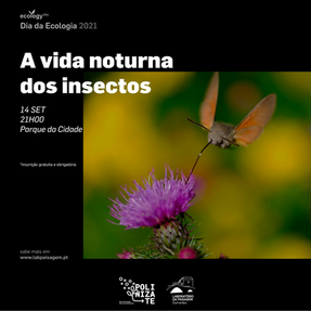 A vida noturna dos insetos