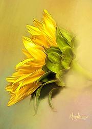 Sideways Sunflower.jpg