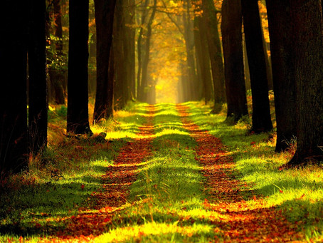 5 Actions Essentielles pour éviter les Obstacles de la Vie