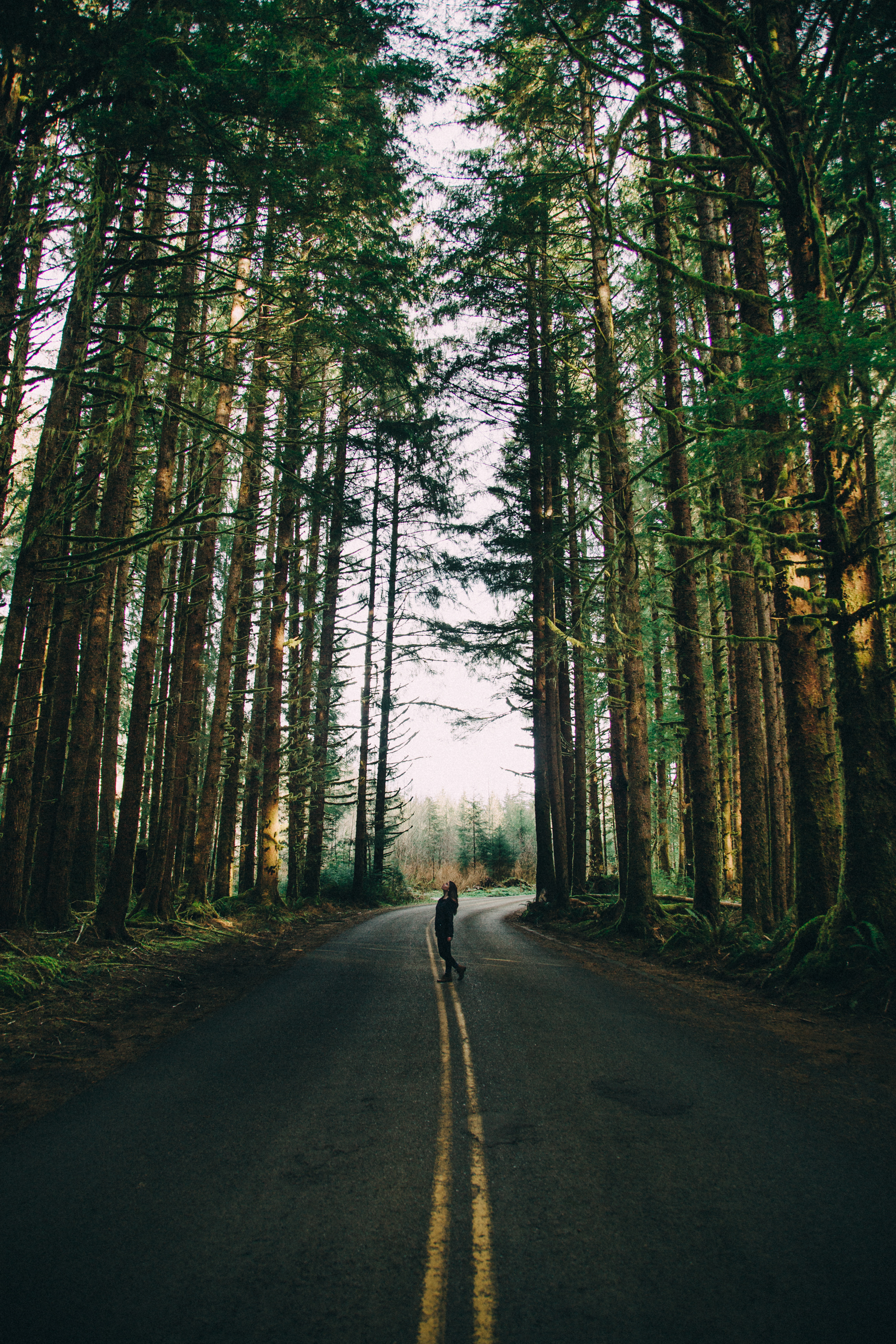 road-model-washington-hoh-rainforest-river-trees-forest-lifestyle-travel-adventure-commercial-fashio