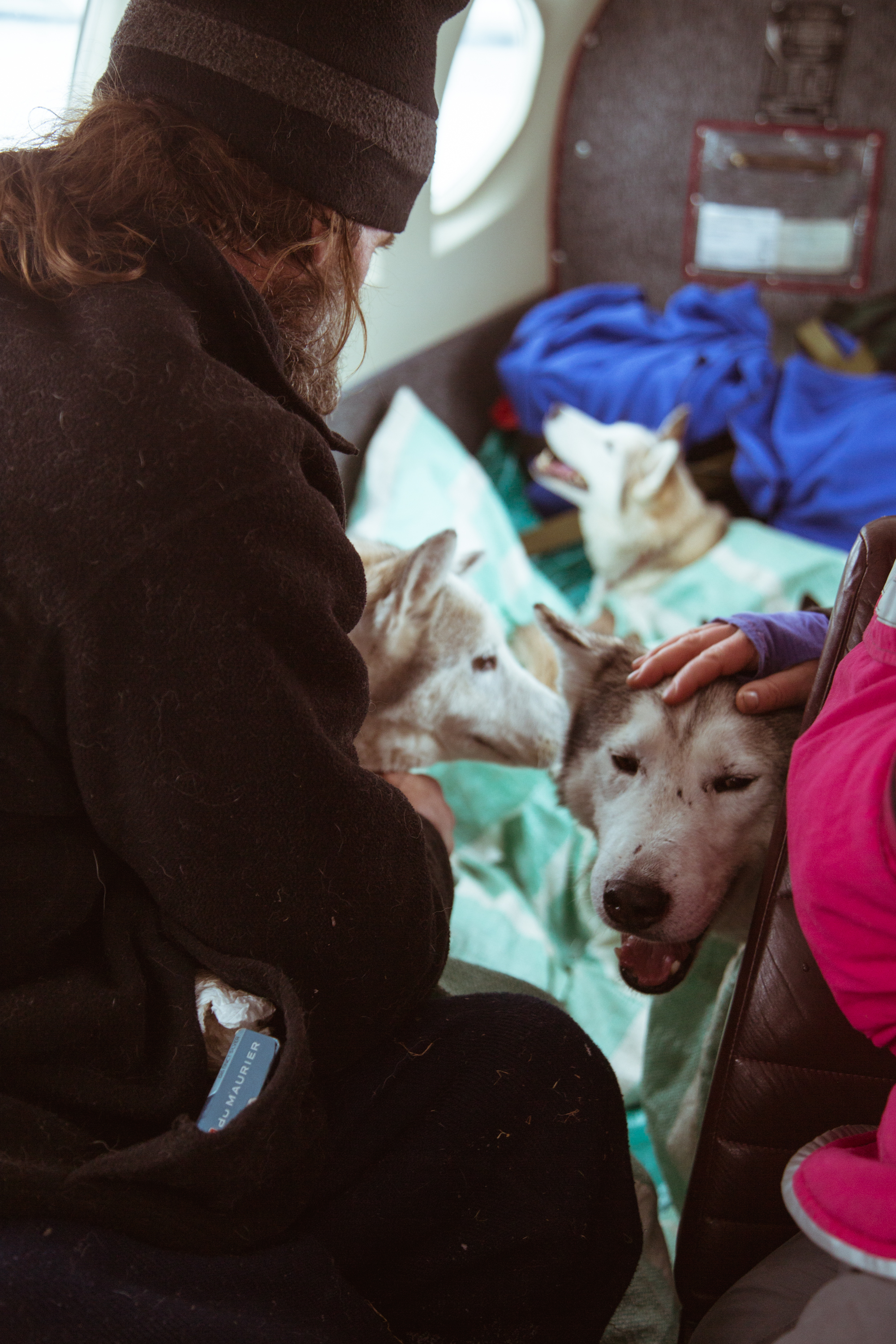 Picking up a Sled Dog Team- Alaska
