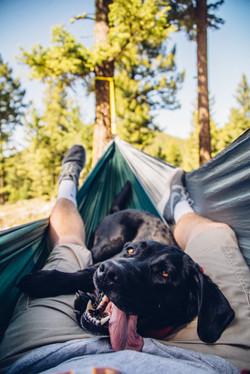 dog hammock, montana