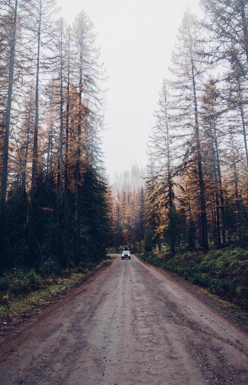 Toyota Land Cruiser, Montana