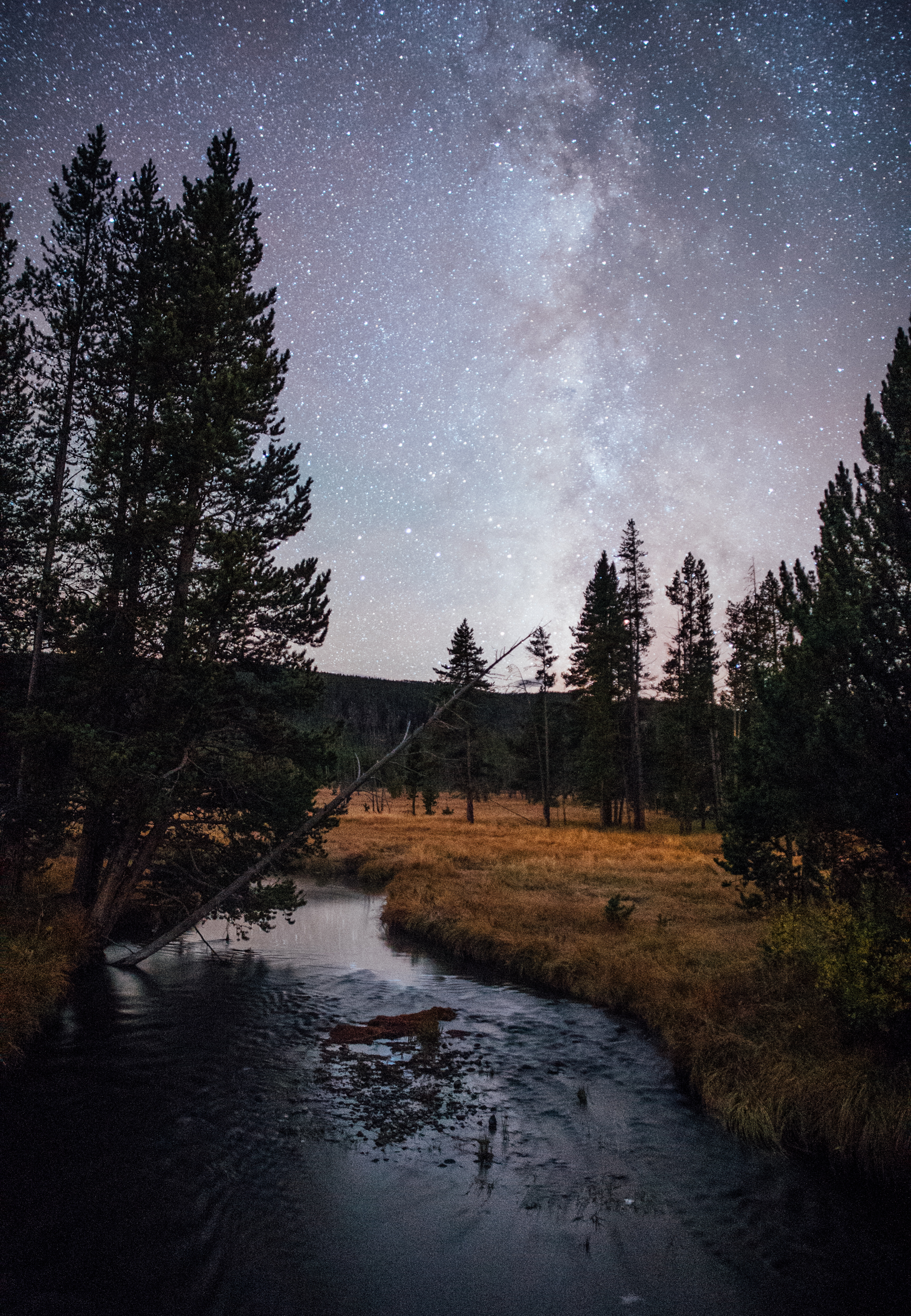 Gibbon River Stars- Yellowstone