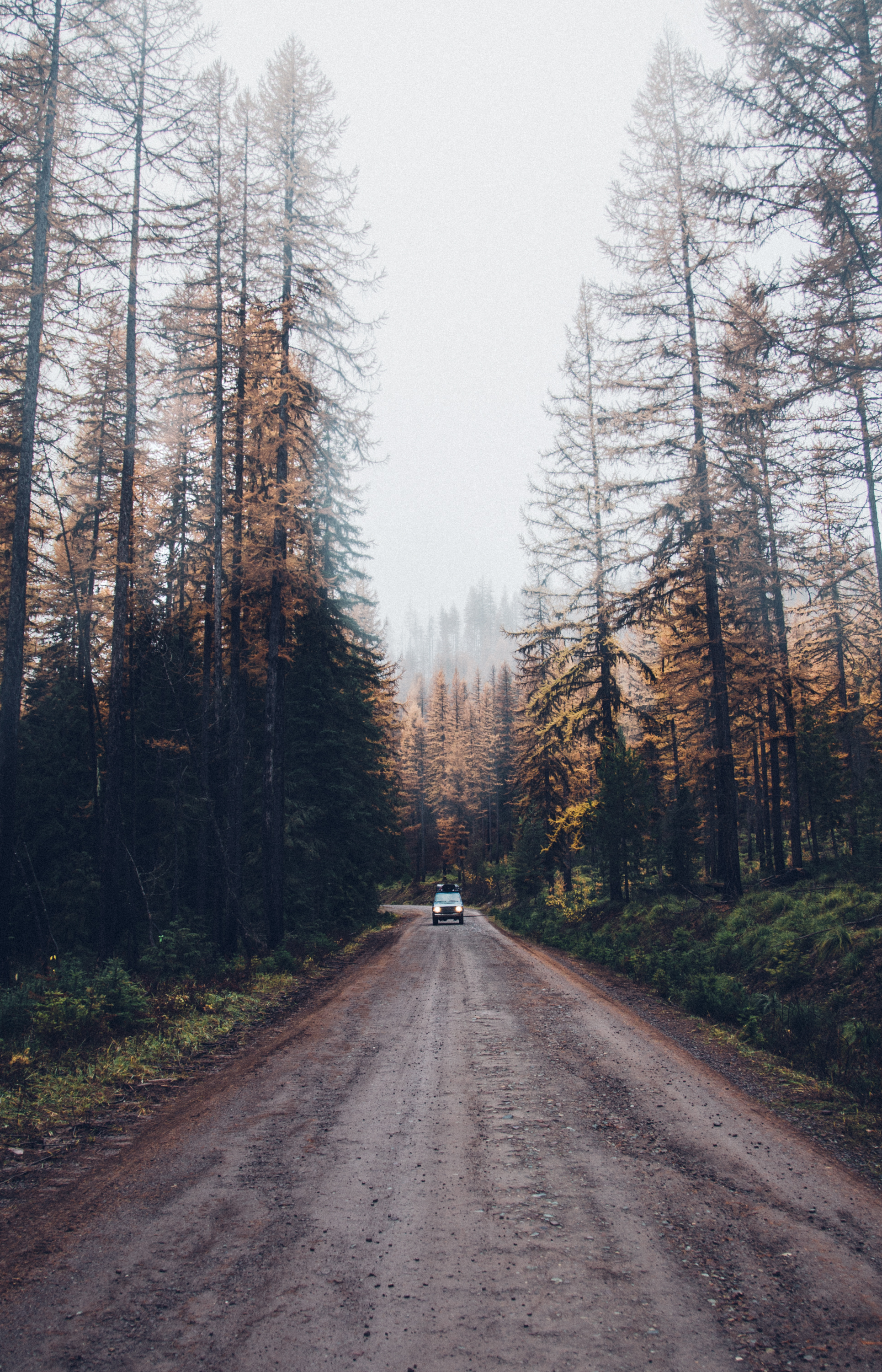 Larch-Tree-Fall-Car-Land-Cruiser-Montana-Travel-Adventure