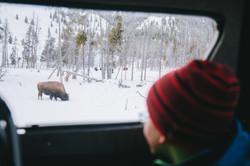 Jan15th-Tourism-SnowCoach-West Yellowstone-Hunter Day-0910