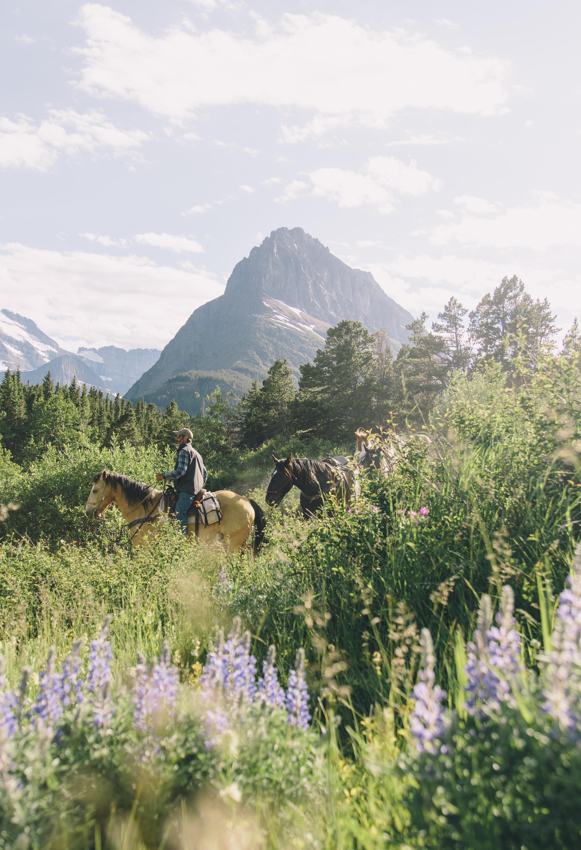 Horse Back in Many Glacier
