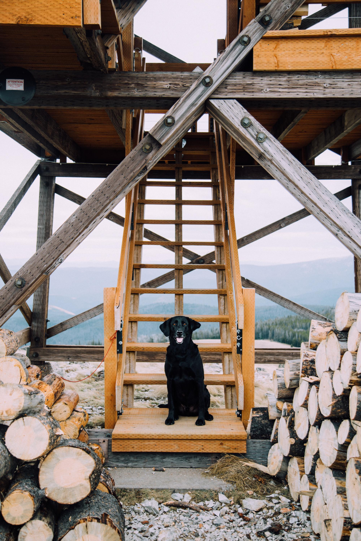 Camping Dog, Montana