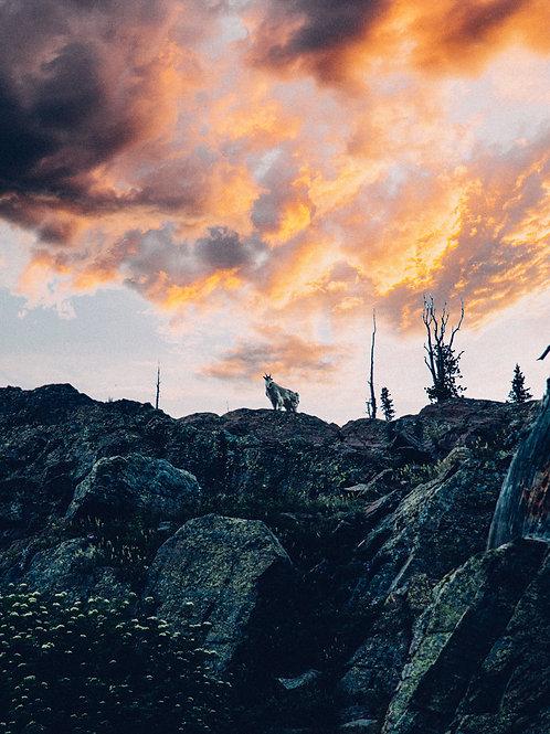 The Watcher, MT