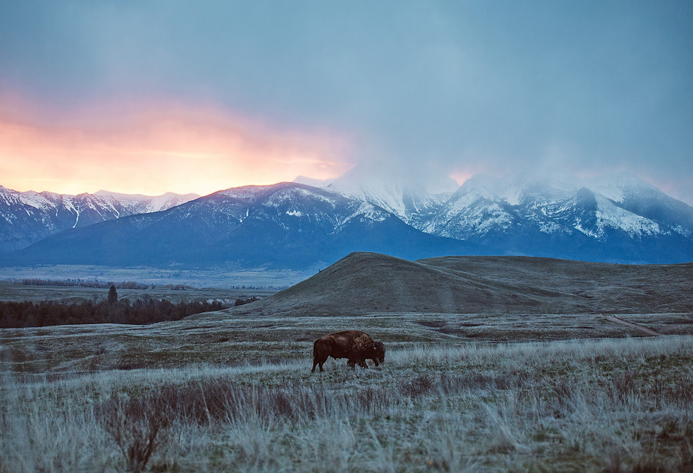 National Bison Range, Montana | Montana Adventure Photographer | Montana Photographer