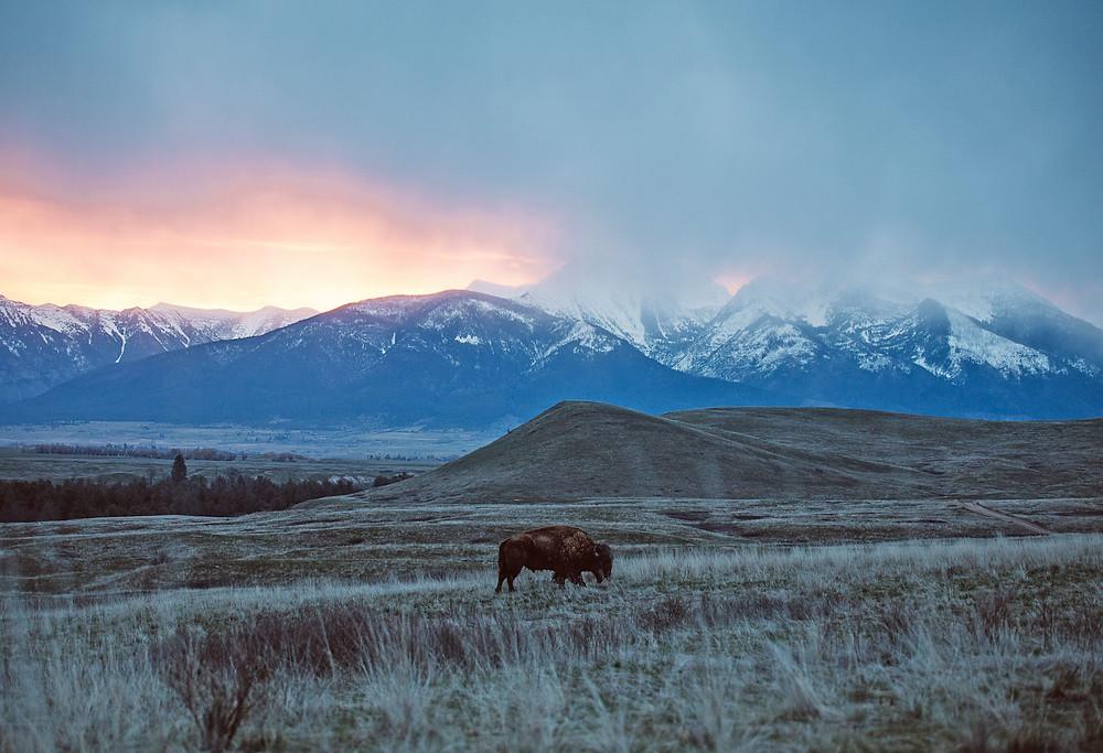 National Bison Range, Montana | Montana Adventure Photographer | Montana Photographer