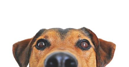 dog-838281.png