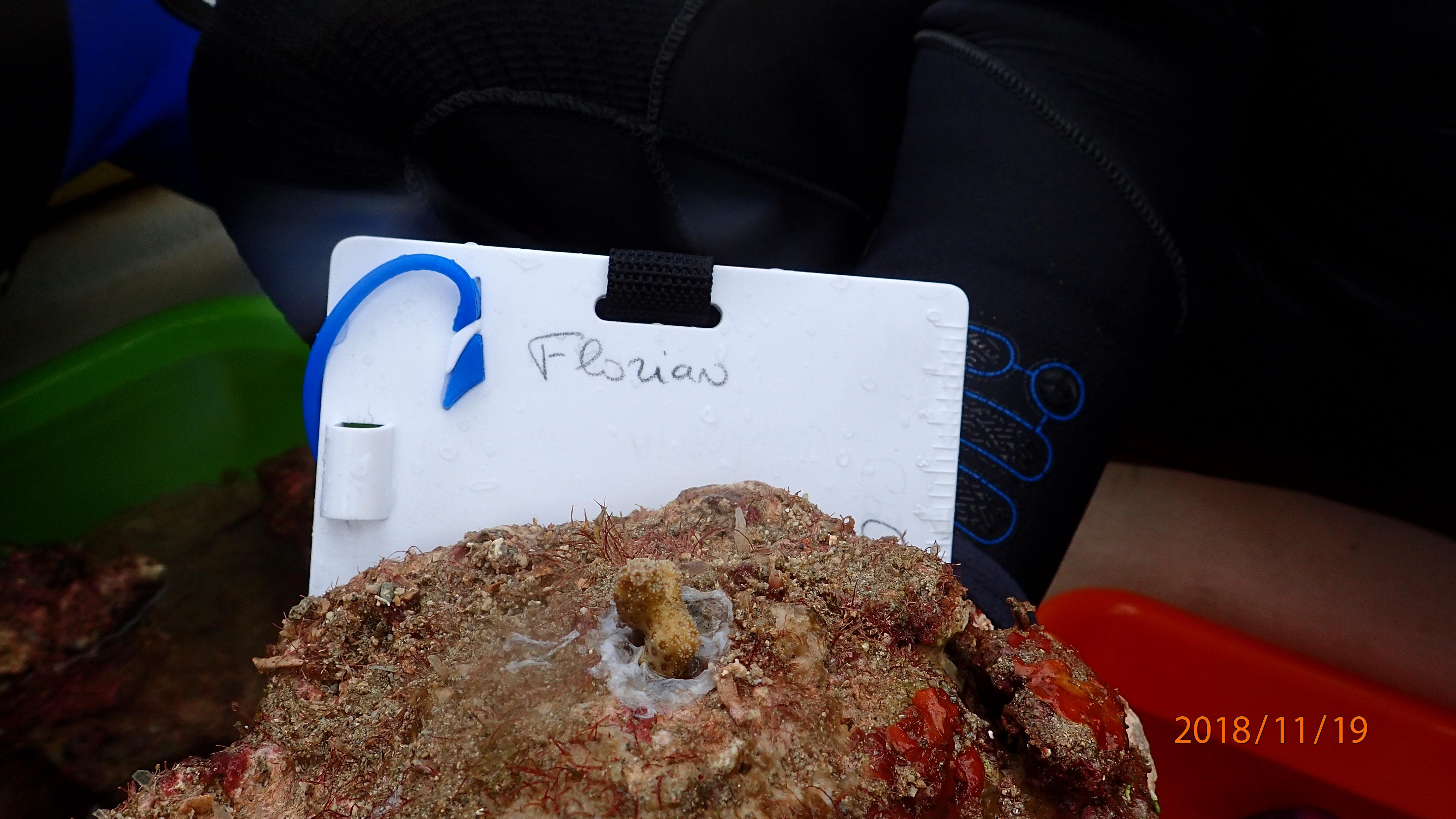 anniversaire fils cadeau corail