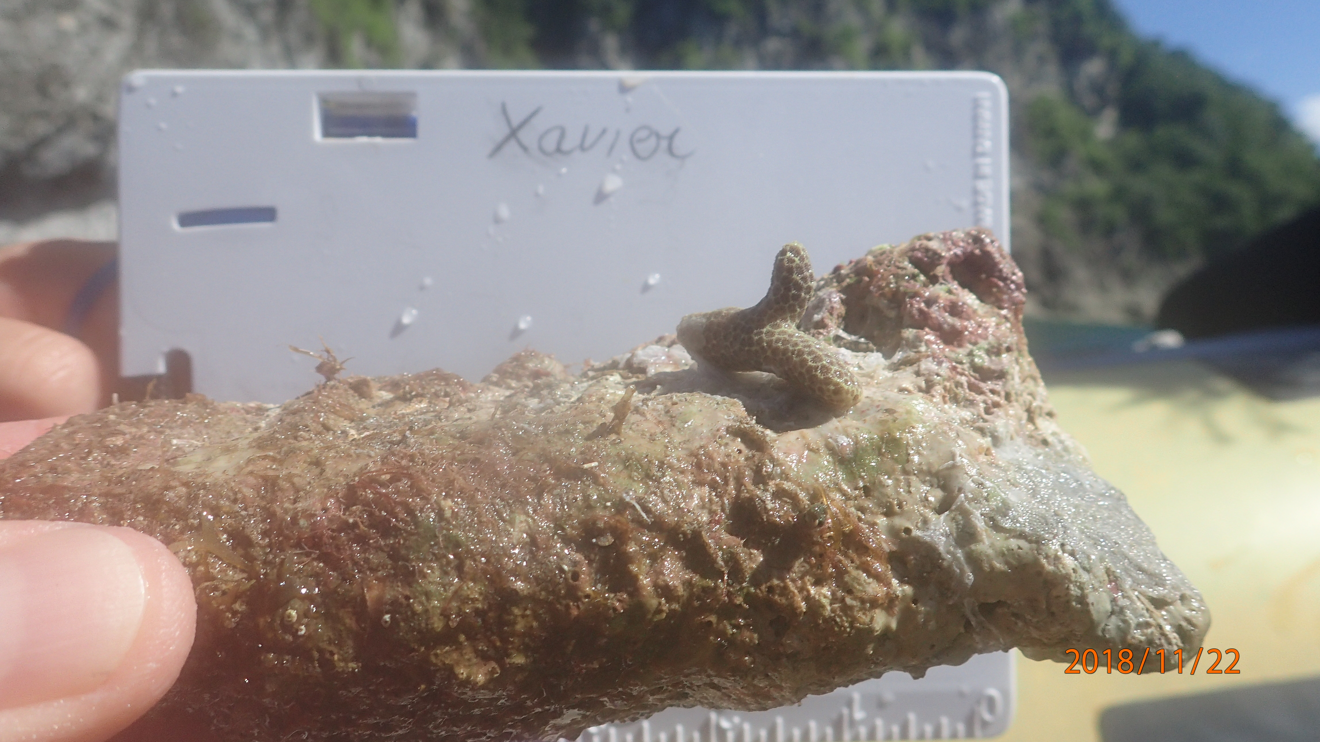 plantation corail deshaies
