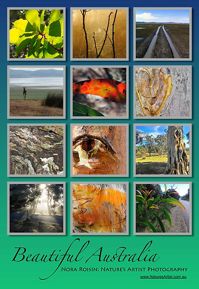 Beautiful Australia collage of 12 images of landscapes, tree bark, leaves and spiders' web.