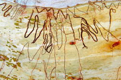 Scribbly Gum Greenways