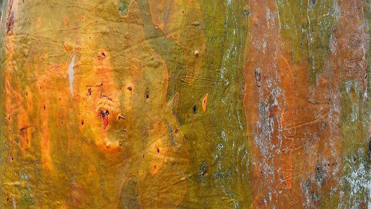 Burrungiri Feelings eucalypt treebark abstract art photographyfrom Ngunawal Collec