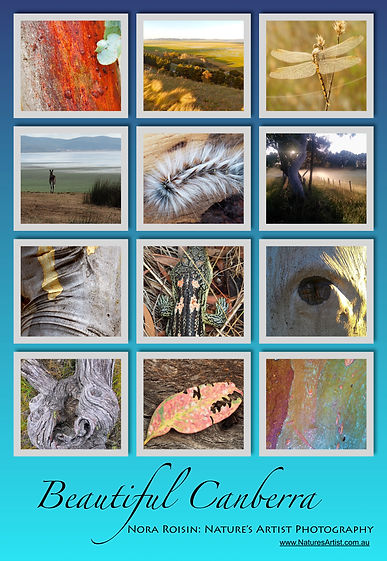 Beautiful Canberra poster is a collage of 12 images of tree bark, landscapes of Canberra with a turquoise background.