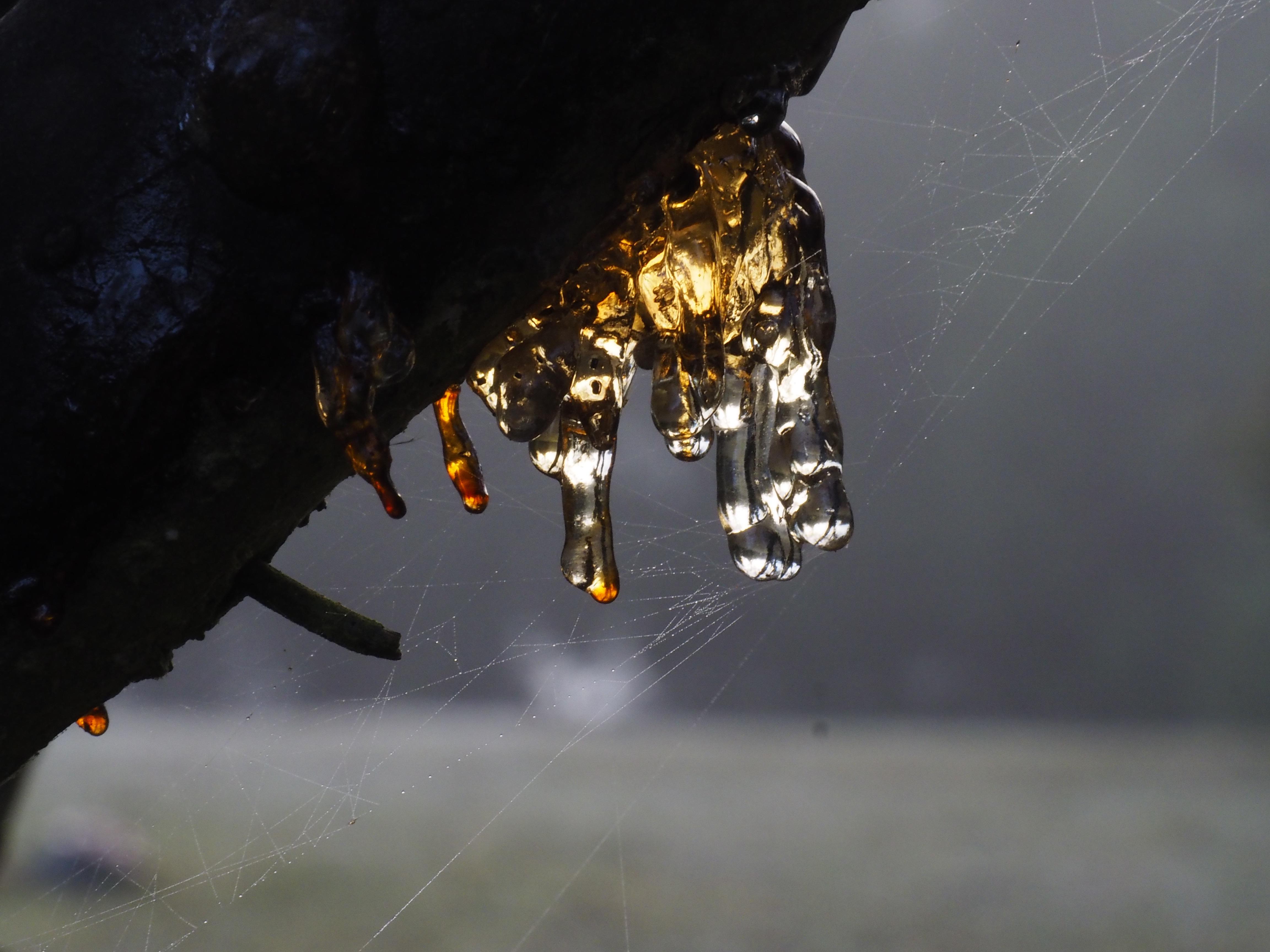 Amber Fingertips