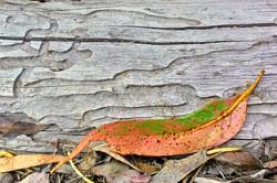 Reclining Leaf