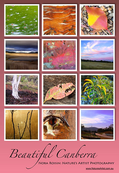 Beautiful Canberra poster is a collage of 12 images of tree bark, landscapes of Canberra with a pink background.