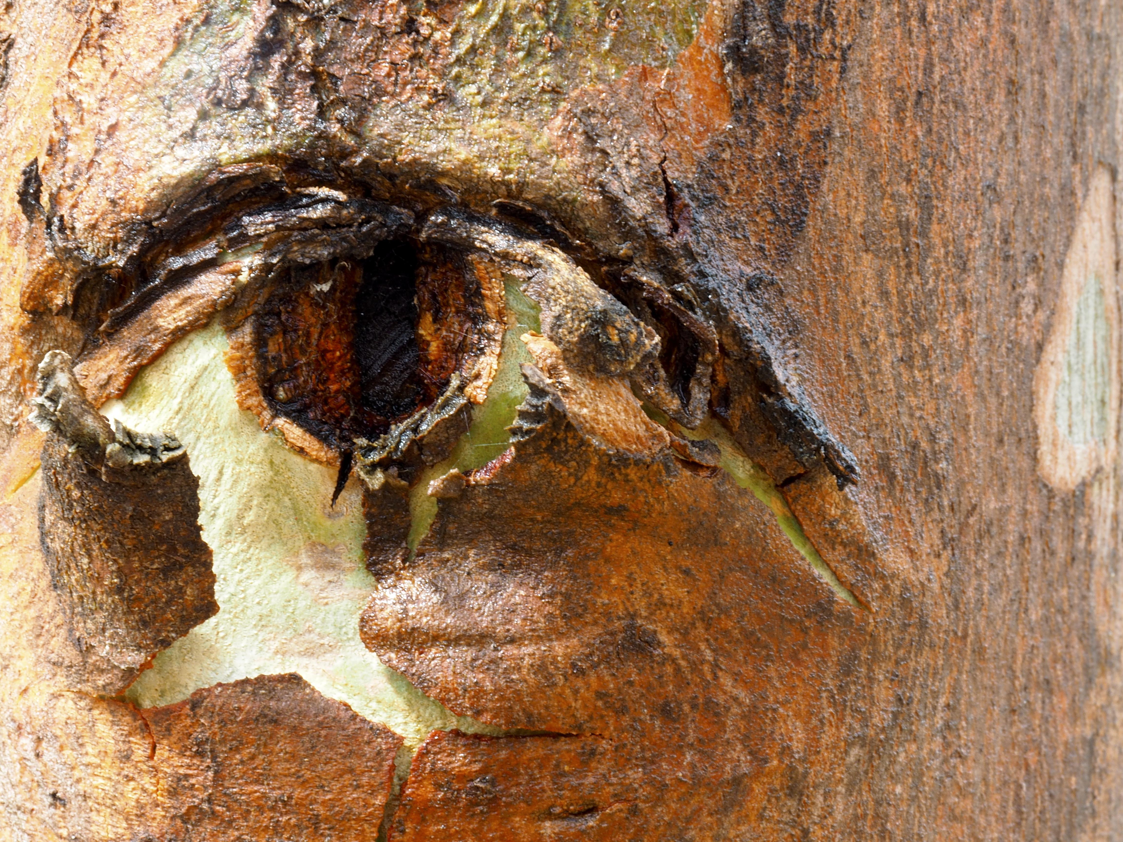 Horse Eye National Arboretum