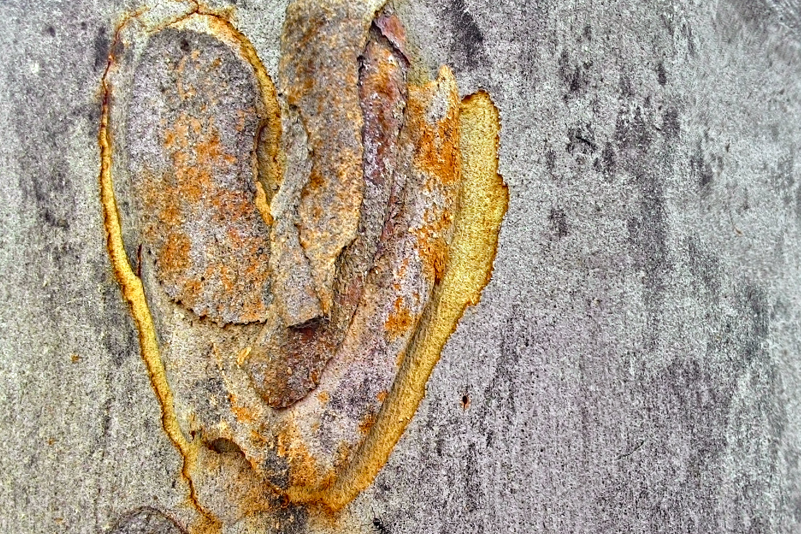 Heart of Bark