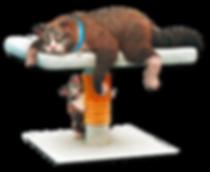 cats-david-goliath.png