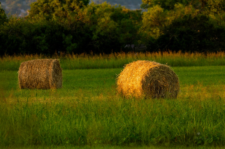 _MG_4451 Round Bales in the morning ligh