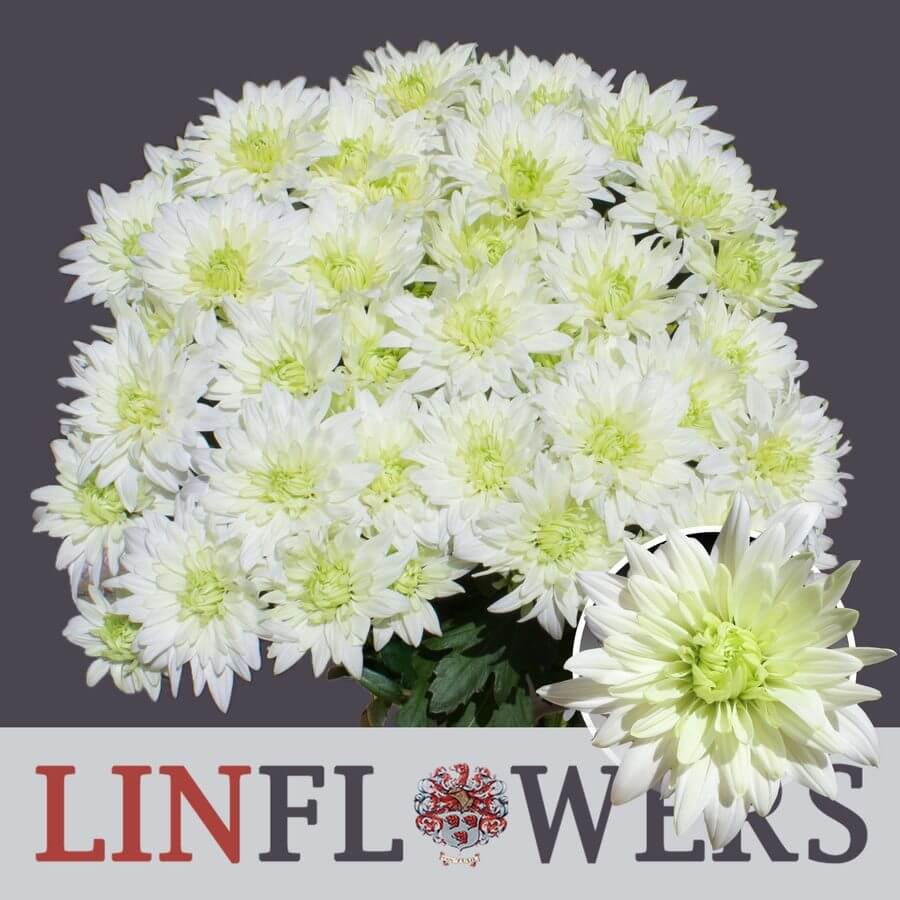 Linflowers