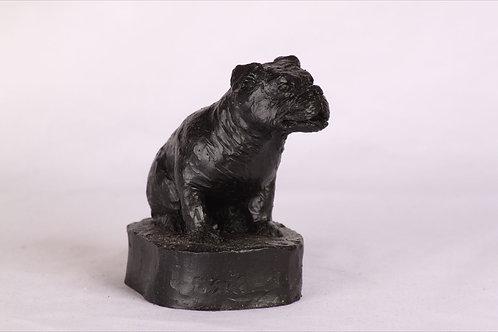 British Bull Dog