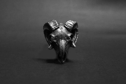 Lamb Skull