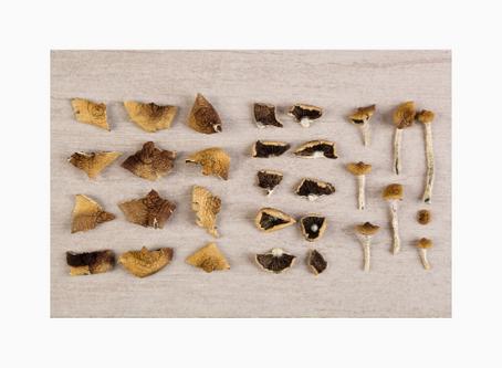 Mushrooms Vs. Medicine