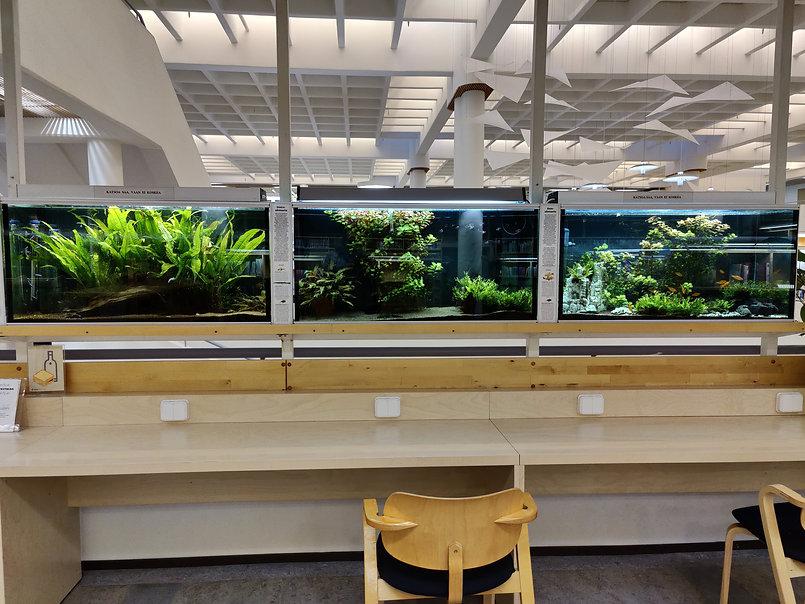 Kirjaston akvaariot.jpg.4.jpg