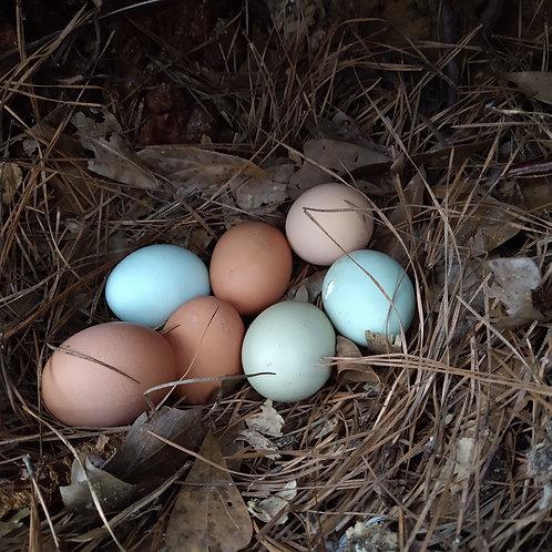12 Free Range Eggs