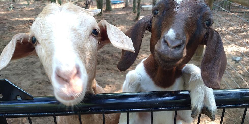 Scrub a Dub-Dub: Goat's Milk Soap