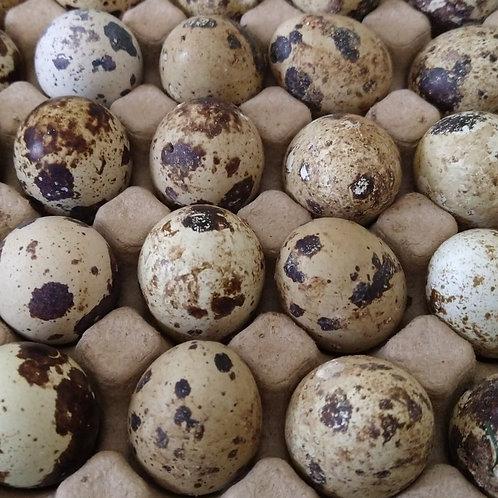 18 Quail Eggs