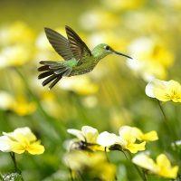 Summer-Hummingbird-1000x1000px-200x200.j