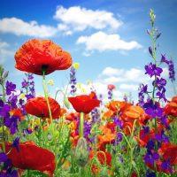 Wildflowers-1000x1000px-200x200.jpg