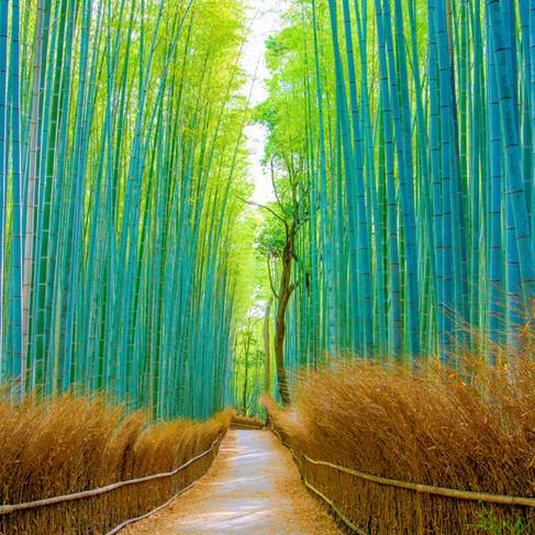 Path-to-Zen-1000x1000-1.jpg
