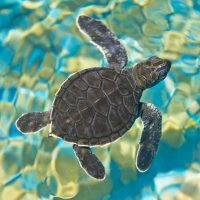Mosaic-Sea-Turtle-Wooden-Jigsaw-Puzzle-2