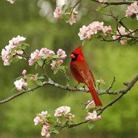 Summer-Cardinal-1000x1000-200x200.jpg
