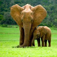 Elephants-Wooden-Jigsaw-Puzzle-1000x1000
