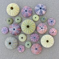 Sea-Urchins-Wooden-Jigsaw-Puzzle-200x200