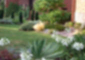 Yew columns and perennials