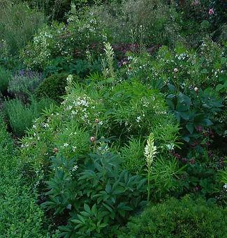 Green white pink planting